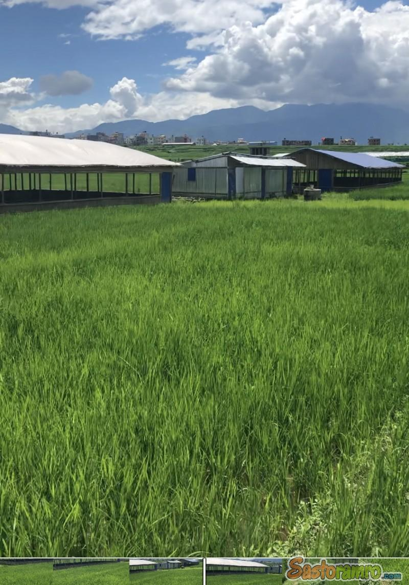 poultry farm for sell