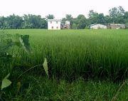 3 kattha land at Chitwan