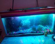 Full aquarium with fish