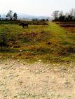 23 Dhoor(12.25 Ana) land at Daldale DharapaniMarg Pragatinagar Nawalparasi
