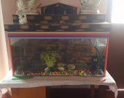 Aquarium on sale