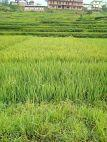 5 ana land at Bhaktapur