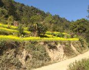 3 ropani 8 ana land at Nagarkot