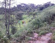 15 ana land at Chhampi Karyabinayak