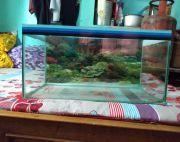 2 ft  fish tank