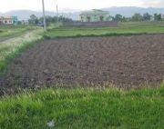 2 kattha 5 dhur land at Pithauli