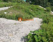 Land sale in Golfutar