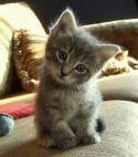 Best Kitten
